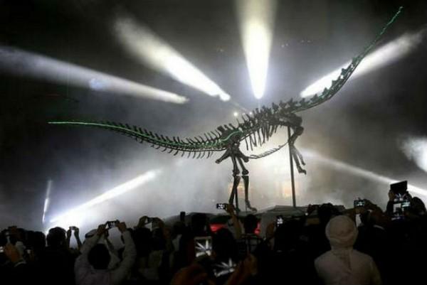 Diplodocus Skeleton