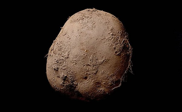Potato 345 (2010)