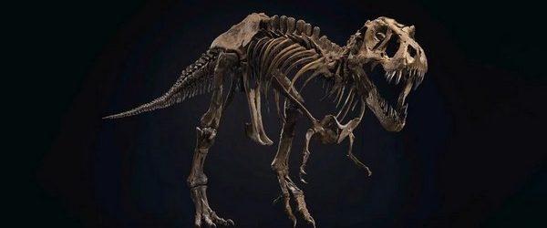 Если вы состоятельный человек хотите купить себе что-то уникальное и феноменальное, то есть уникальная возможность обзавестись скелетом тираннозавра «Стэна» возрастом 67 миллионов лет. Продаже гигантского динозавра занимается аукционы дом Стобис, […]