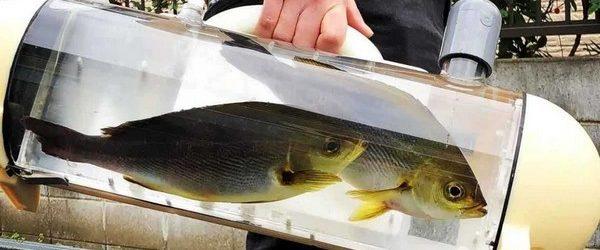 Если вы вас есть дома аквариум с рыбами, которых иногда хочется взять с собой на прогулку, тогда необычная разработка «Ma Corporation» точно вас заинтересует. Небольшая команда энтузиастов из Японии создала […]